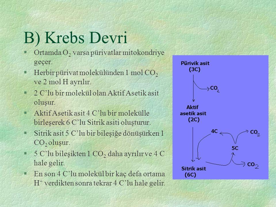B) Krebs Devri Ortamda O2 varsa pürivatlar mitokondriye geçer.