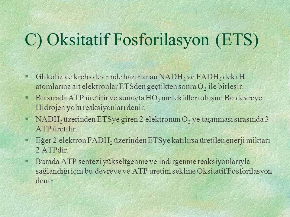 C) Oksitatif Fosforilasyon (ETS)