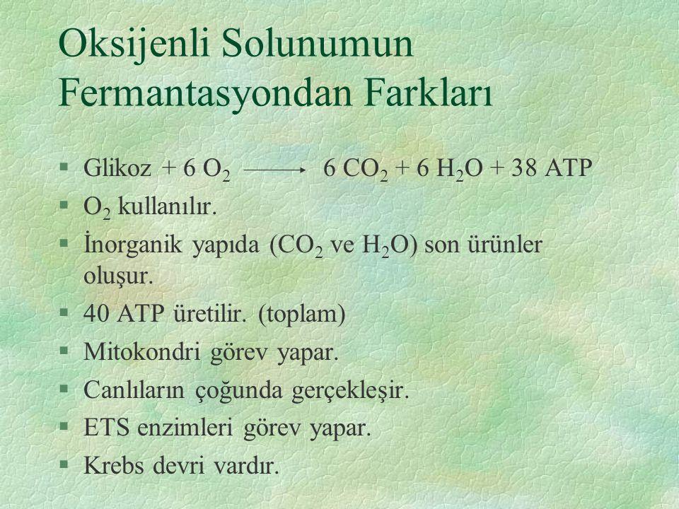 Oksijenli Solunumun Fermantasyondan Farkları