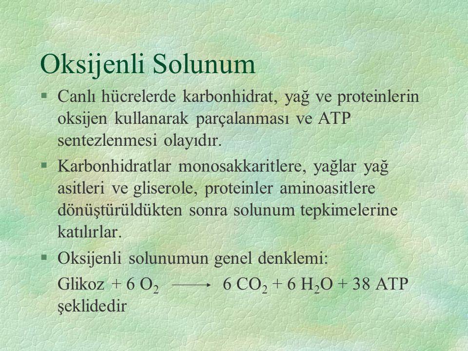 Oksijenli Solunum Canlı hücrelerde karbonhidrat, yağ ve proteinlerin oksijen kullanarak parçalanması ve ATP sentezlenmesi olayıdır.