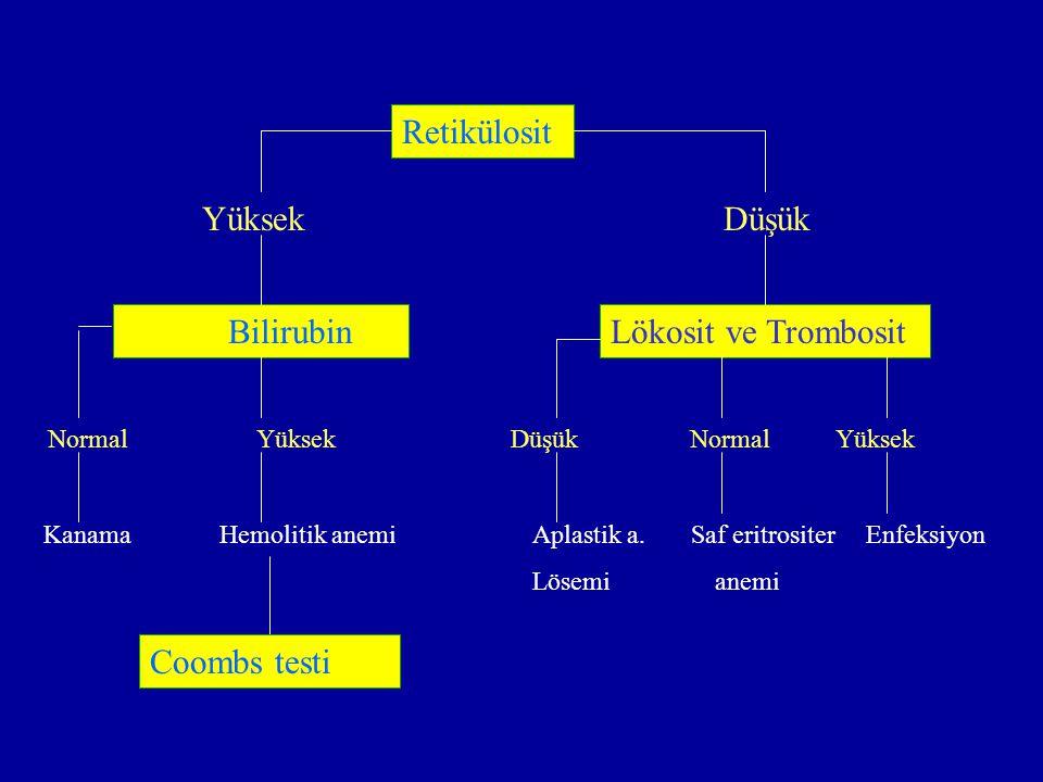 Retikülosit Yüksek Düşük Bilirubin Lökosit ve Trombosit Coombs testi