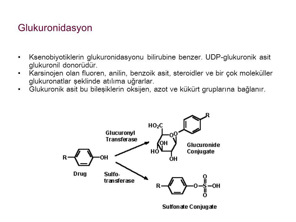 Glukuronidasyon Ksenobiyotiklerin glukuronidasyonu bilirubine benzer. UDP-glukuronik asit glukuronil donorüdür.