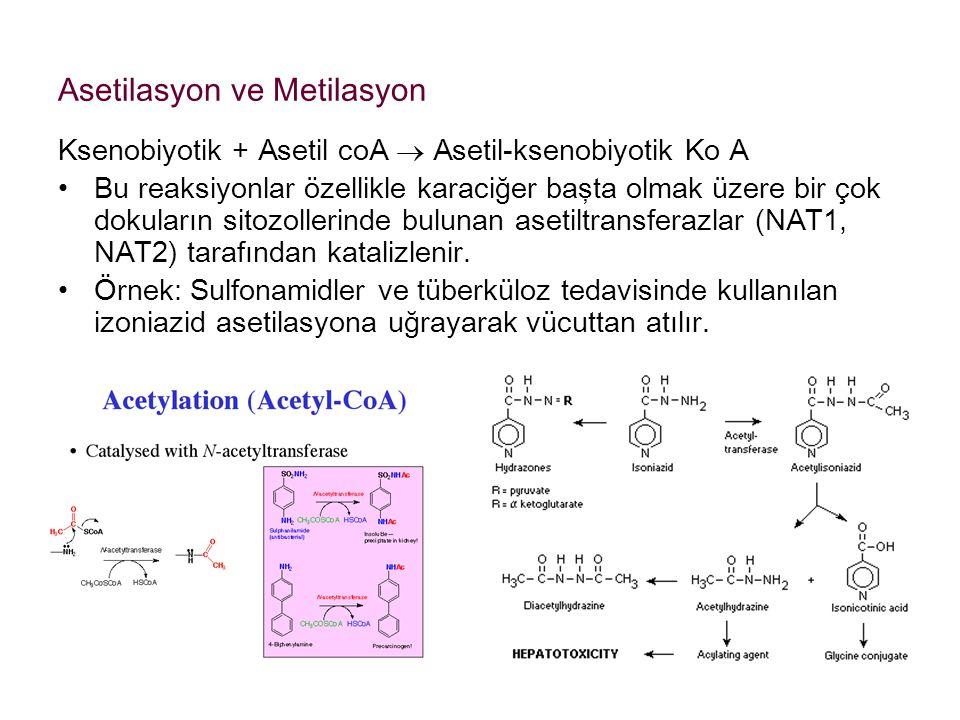 Asetilasyon ve Metilasyon