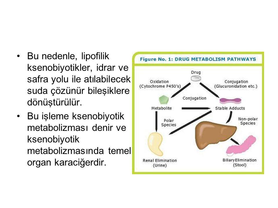 Bu nedenle, lipofilik ksenobiyotikler, idrar ve safra yolu ile atılabilecek suda çözünür bileşiklere dönüştürülür.