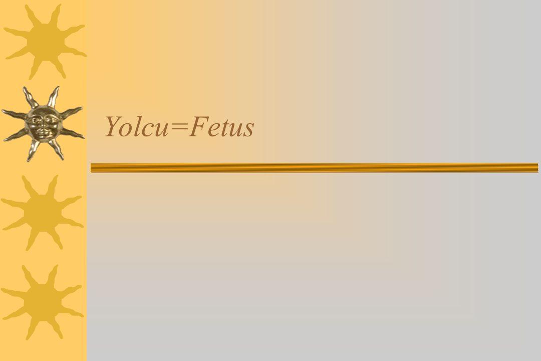 Yolcu=Fetus