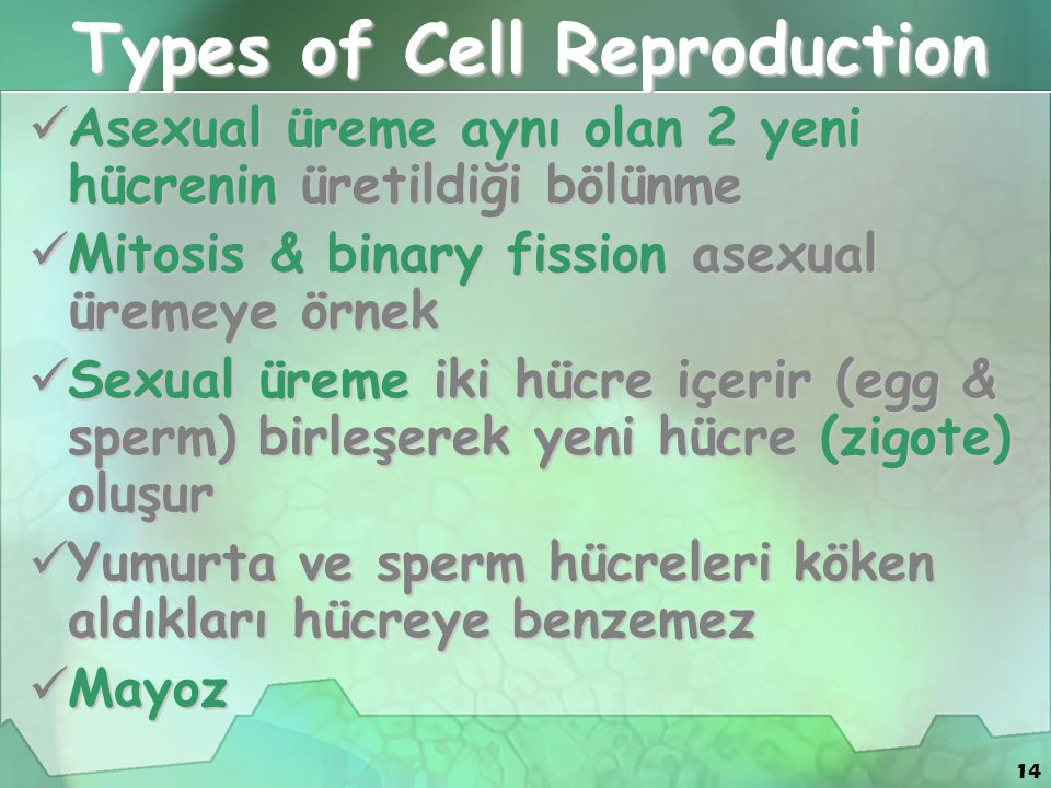 Types of Cell Reproduction