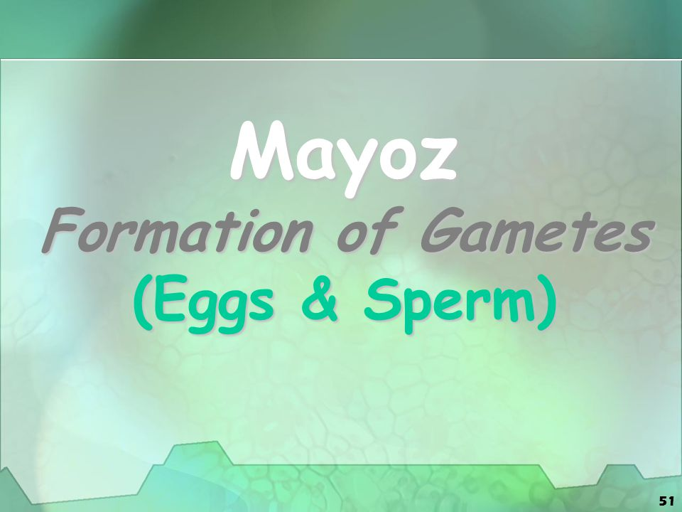 Mayoz Formation of Gametes (Eggs & Sperm)