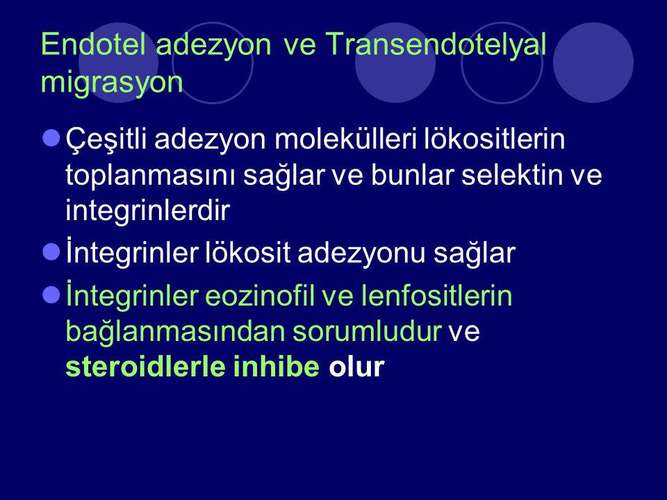 Endotel adezyon ve Transendotelyal migrasyon