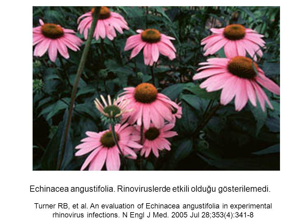 Echinacea angustifolia. Rinoviruslerde etkili olduğu gösterilemedi.