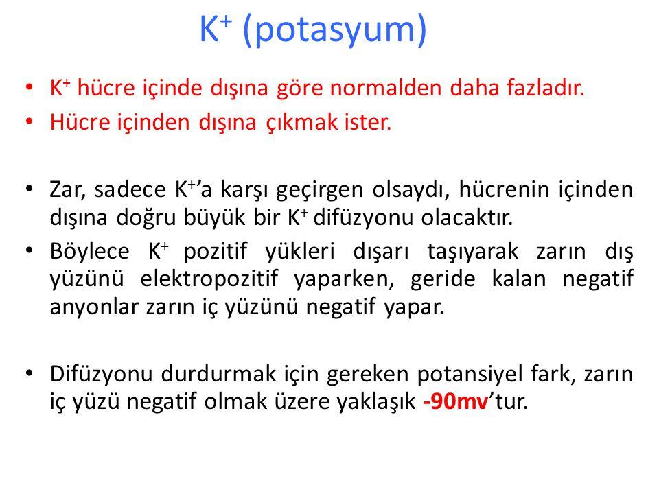 K+ (potasyum) K+ hücre içinde dışına göre normalden daha fazladır.