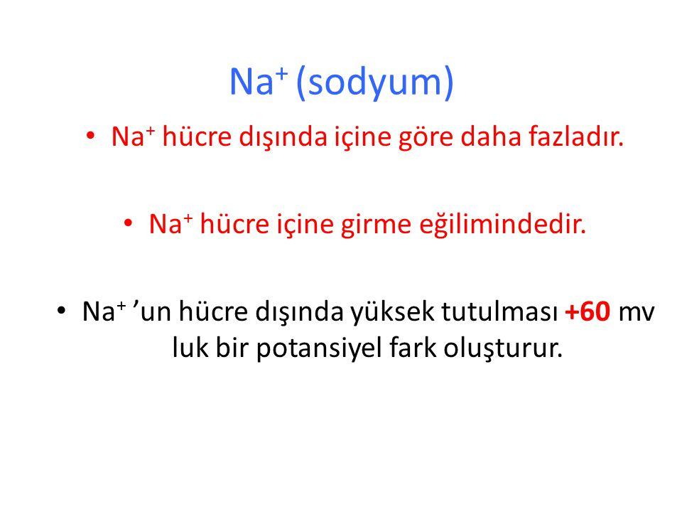 Na+ (sodyum) Na+ hücre dışında içine göre daha fazladır.