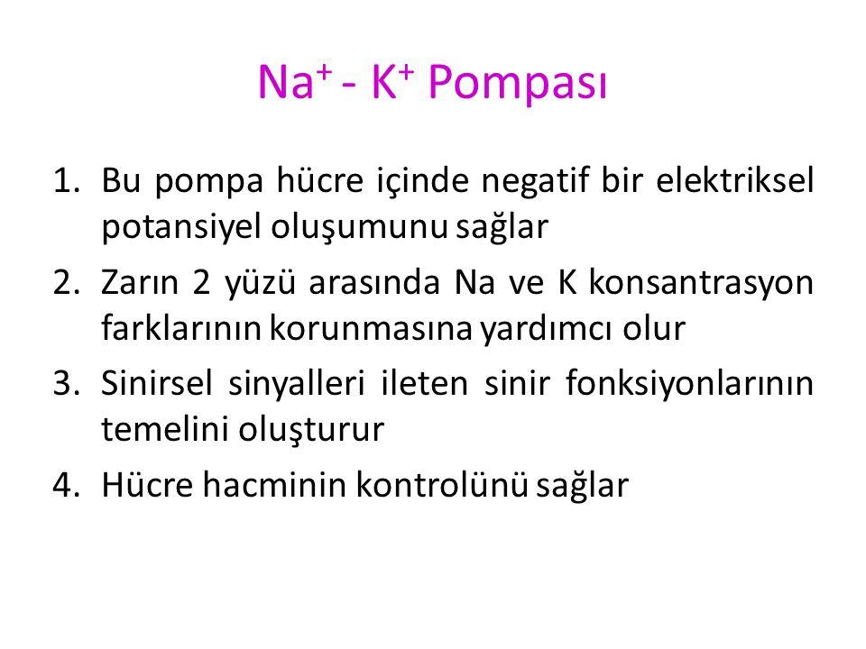 Na+ - K+ Pompası Bu pompa hücre içinde negatif bir elektriksel potansiyel oluşumunu sağlar.