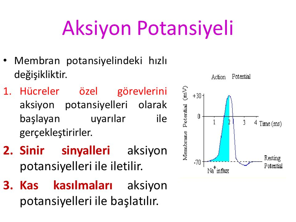 Aksiyon Potansiyeli Membran potansiyelindeki hızlı değişikliktir.