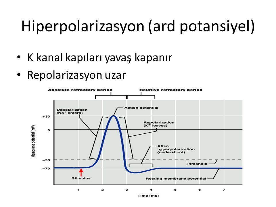 Hiperpolarizasyon (ard potansiyel)