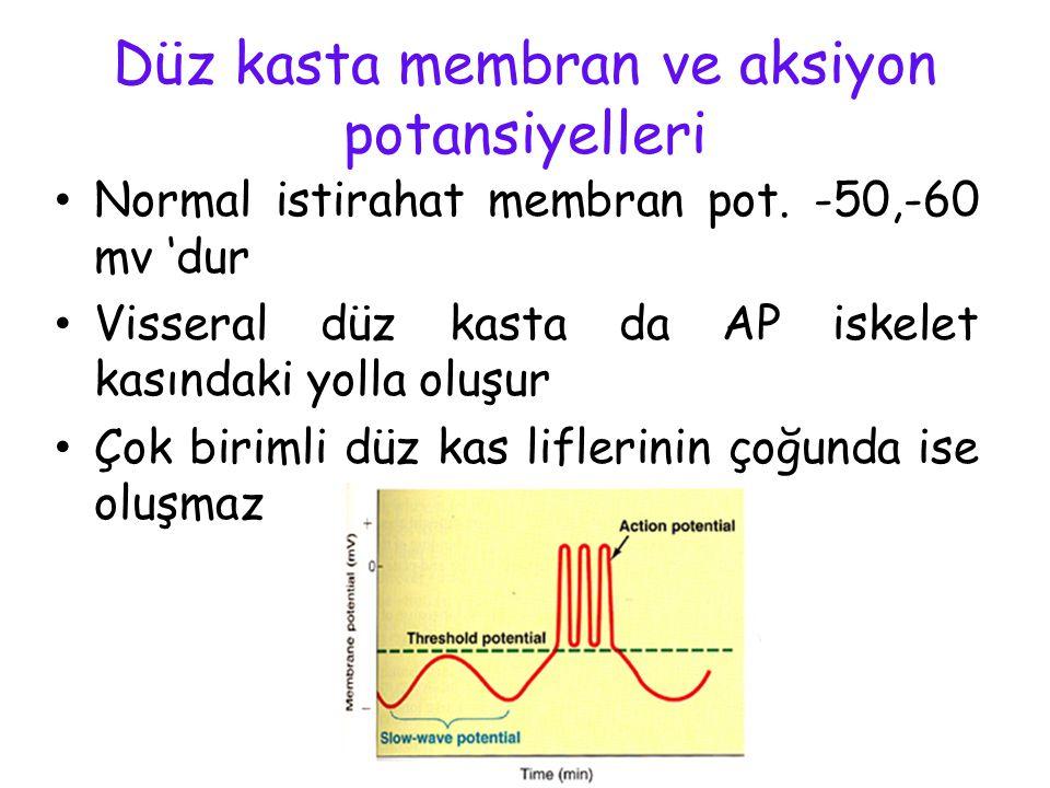 Düz kasta membran ve aksiyon potansiyelleri