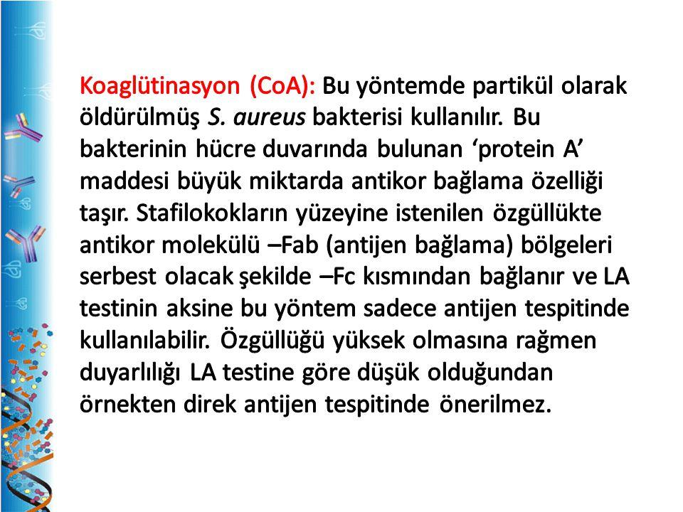 Koaglütinasyon (CoA): Bu yöntemde partikül olarak öldürülmüş S