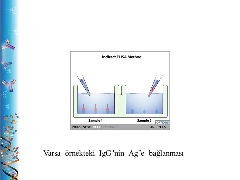 Varsa örnekteki IgG'nin Ag'e bağlanması