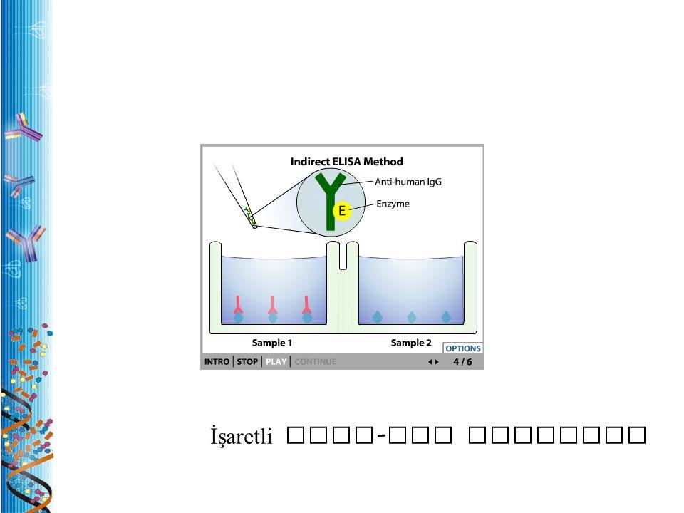 İşaretli anti-IgG antikoru