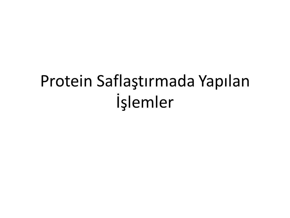 Protein Saflaştırmada Yapılan İşlemler