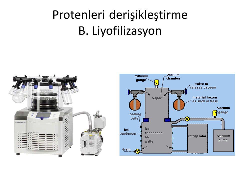 Protenleri derişikleştirme B. Liyofilizasyon
