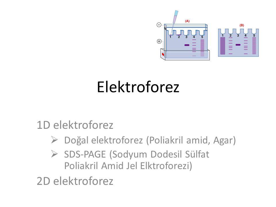 Elektroforez 1D elektroforez 2D elektroforez