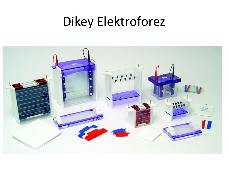 Dikey Elektroforez