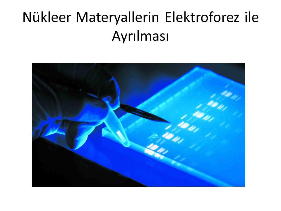 Nükleer Materyallerin Elektroforez ile Ayrılması