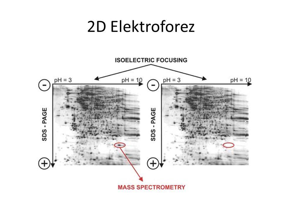 2D Elektroforez