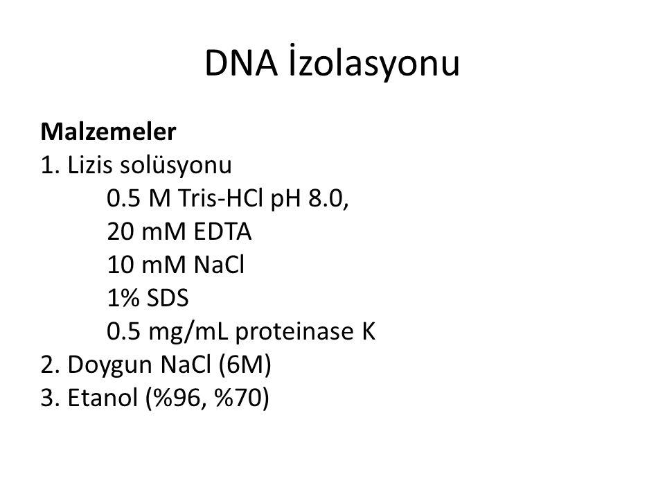 DNA İzolasyonu