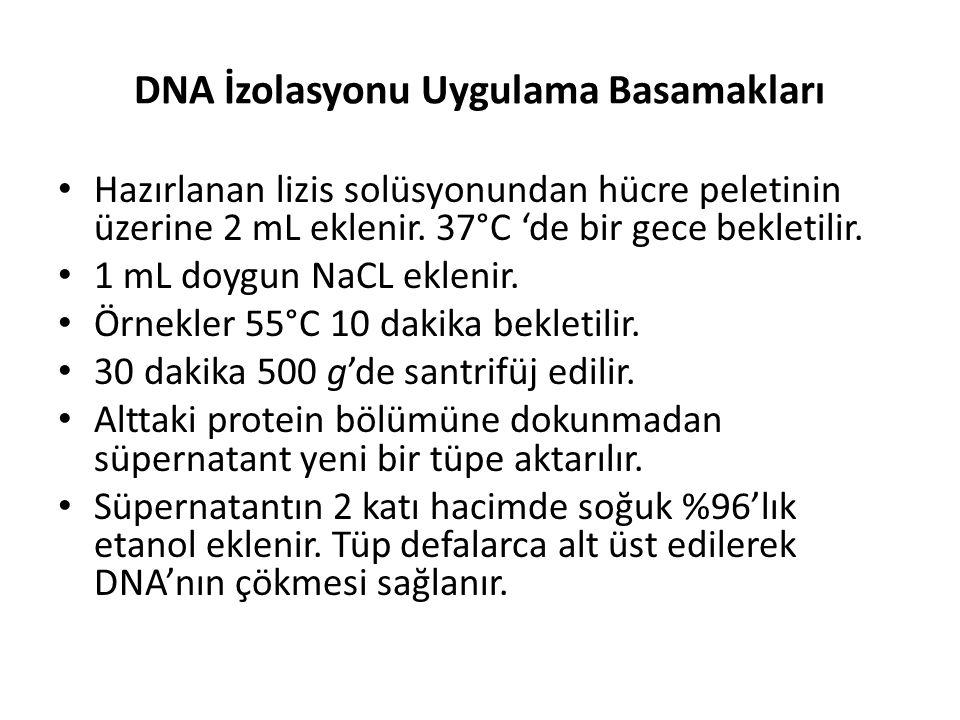 DNA İzolasyonu Uygulama Basamakları