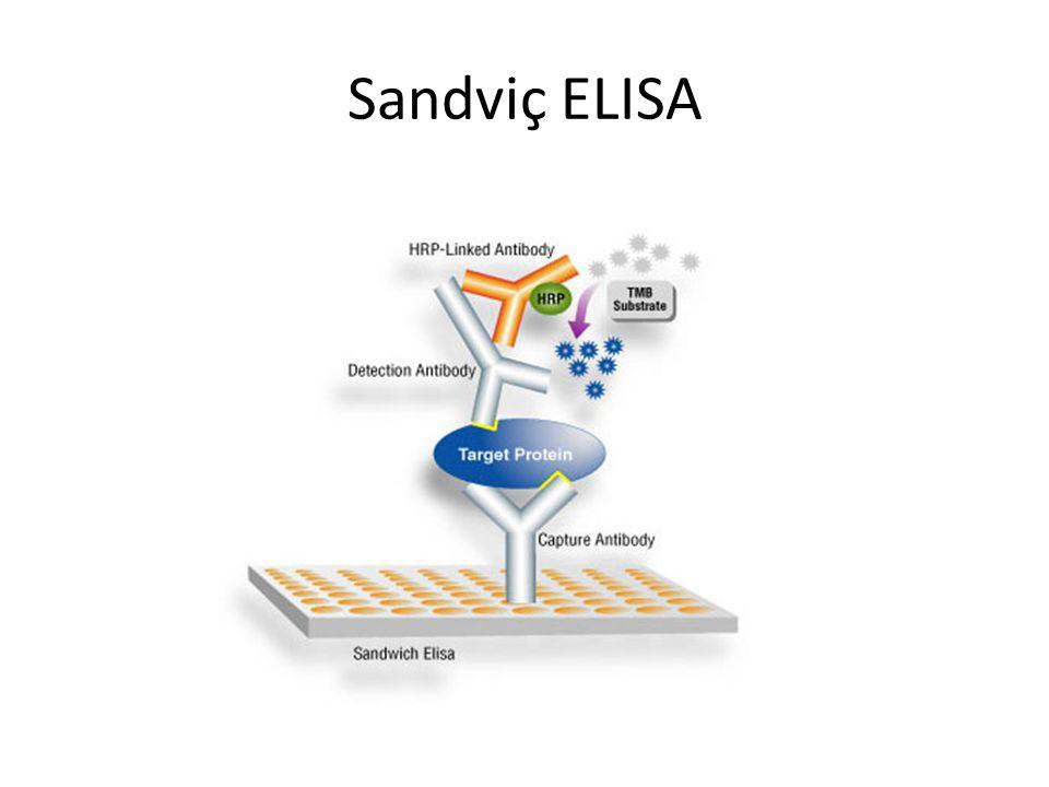 Sandviç ELISA