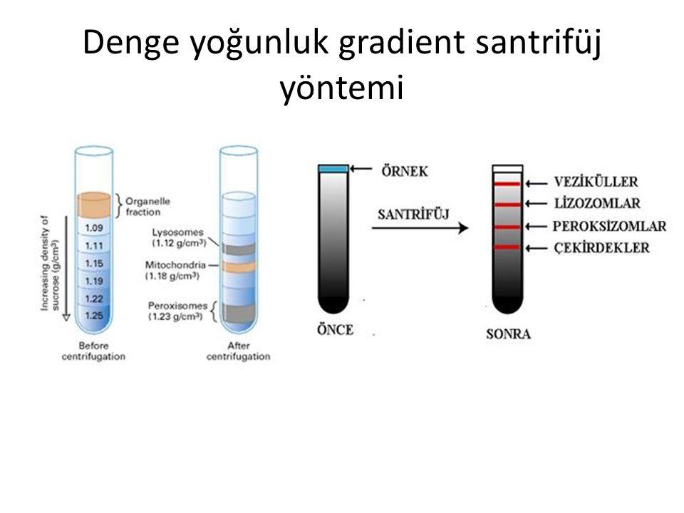 Denge yoğunluk gradient santrifüj yöntemi