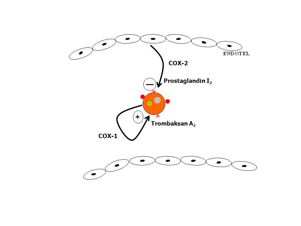 ENDOTEL COX-2 Prostaglandin I2 — + Trombaksan A2 COX-1