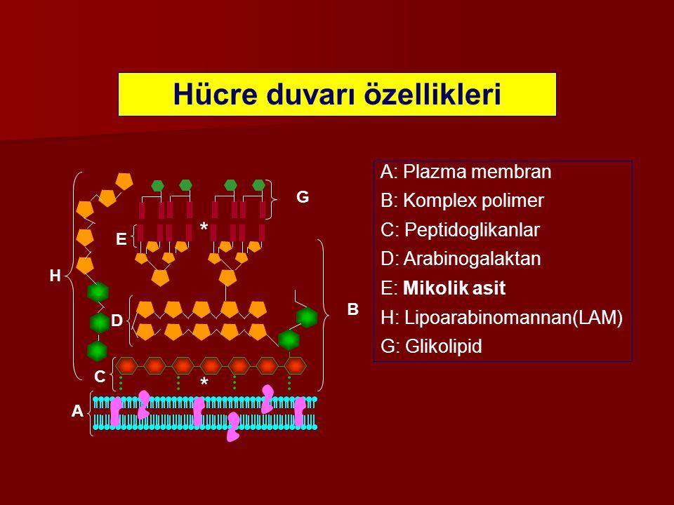 Hücre duvarı özellikleri