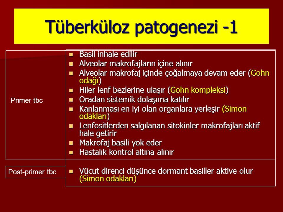 Tüberküloz patogenezi -1
