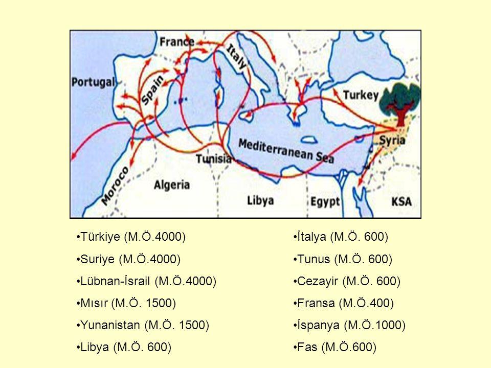 Türkiye (M.Ö.4000) Suriye (M.Ö.4000) Lübnan-İsrail (M.Ö.4000) Mısır (M.Ö. 1500) Yunanistan (M.Ö. 1500)