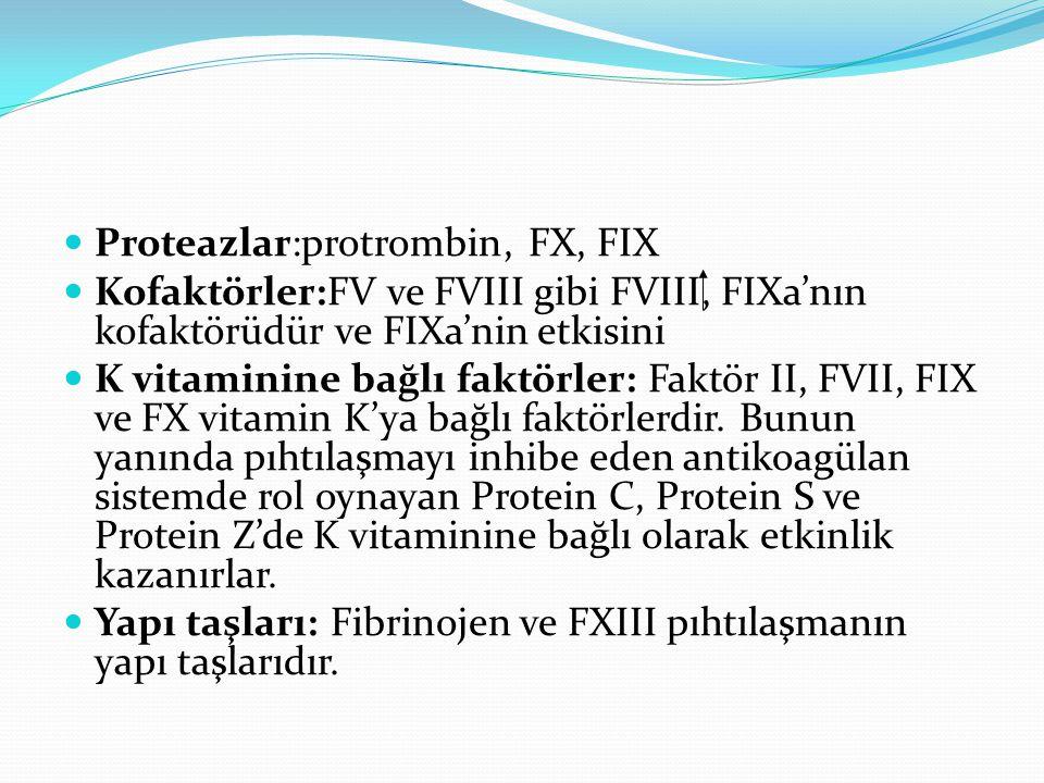 Proteazlar:protrombin, FX, FIX