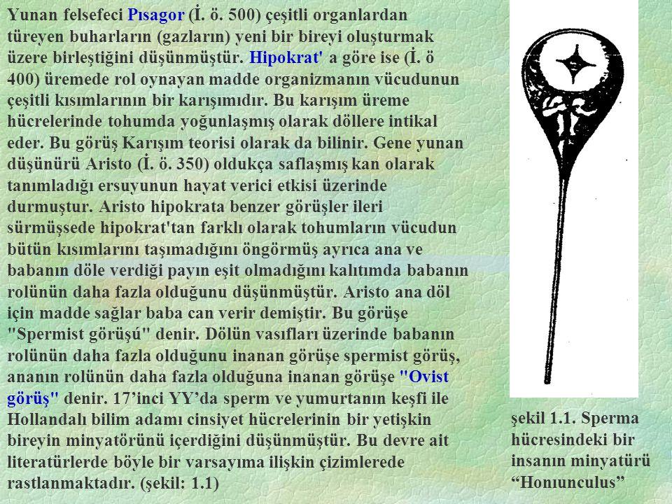Yunan felsefeci Pısagor (İ. ö
