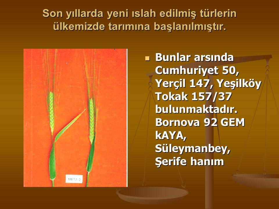 Son yıllarda yeni ıslah edilmiş türlerin ülkemizde tarımına başlanılmıştır.