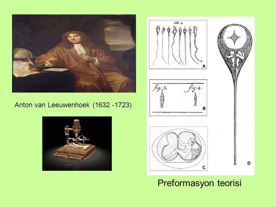 Preformasyon teorisi Anton van Leeuwenhoek (1632 -1723)