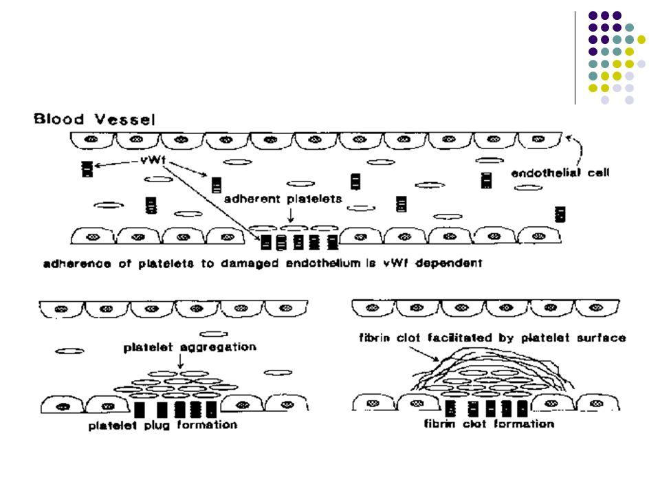 Trombosit adezyon ve agregasyonu
