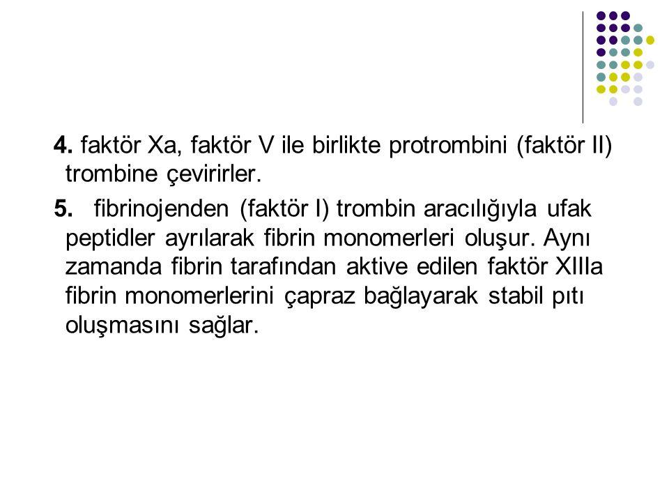 4. faktör Xa, faktör V ile birlikte protrombini (faktör II) trombine çevirirler.