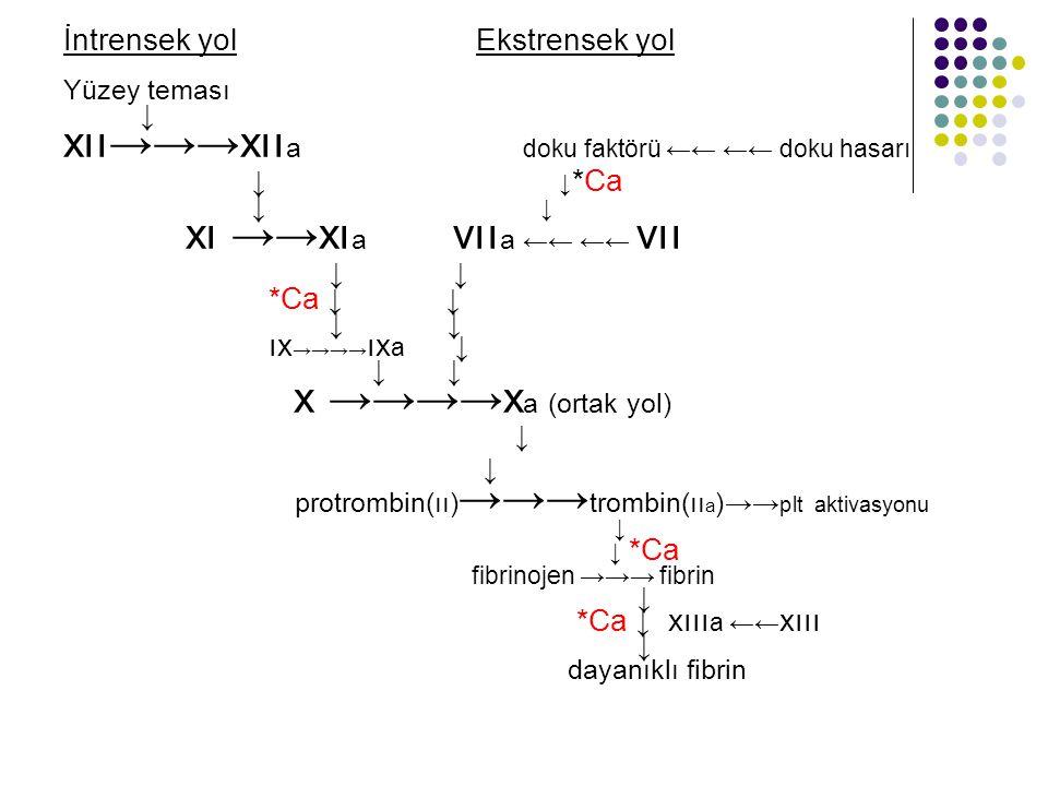 xıı→→→xııa doku faktörü ←← ←← doku hasarı xı →→xıa vııa ←← ←← vıı