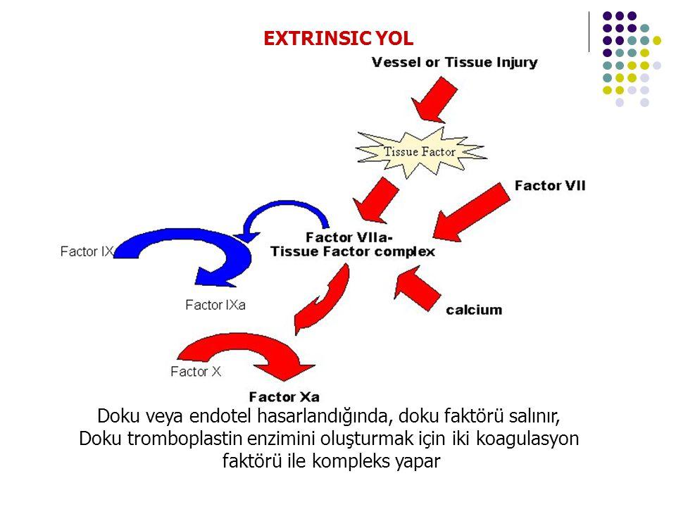 Doku veya endotel hasarlandığında, doku faktörü salınır,