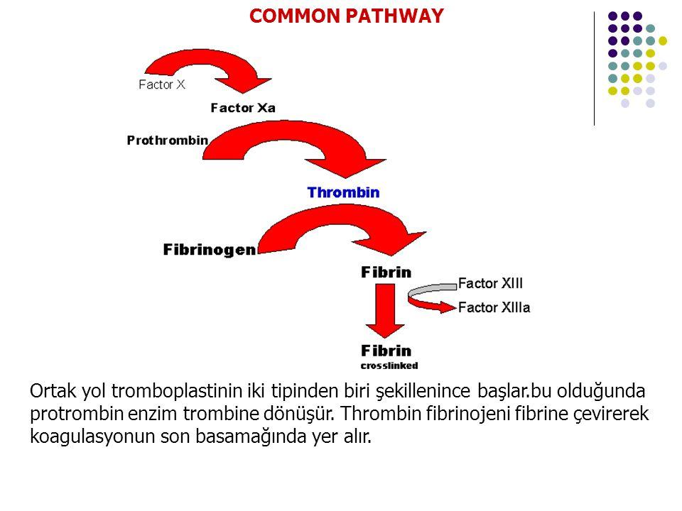 COMMON PATHWAY
