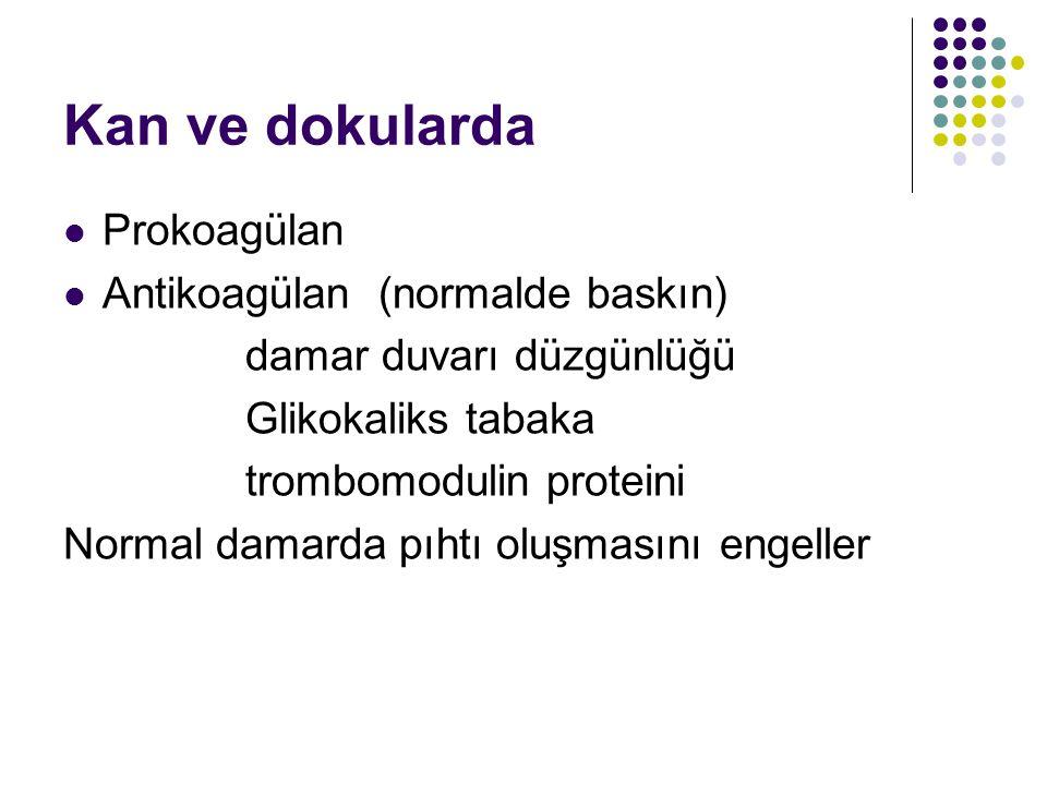 Kan ve dokularda Prokoagülan Antikoagülan (normalde baskın)