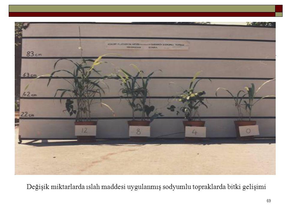 Değişik miktarlarda ıslah maddesi uygulanmış sodyumlu topraklarda bitki gelişimi