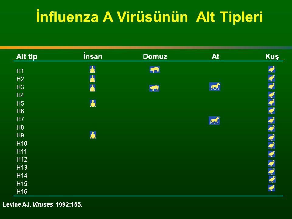 İnfluenza A Virüsünün Alt Tipleri