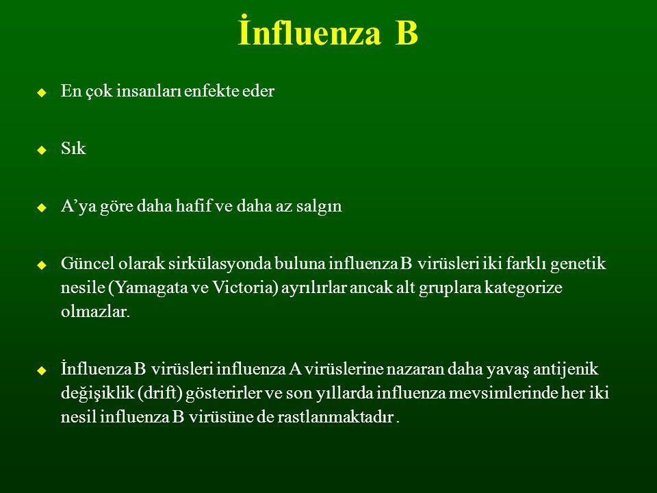 İnfluenza B En çok insanları enfekte eder Sık