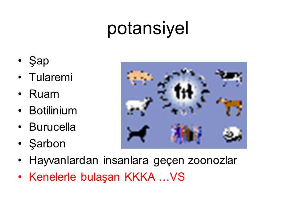 potansiyel Şap Tularemi Ruam Botilinium Burucella Şarbon